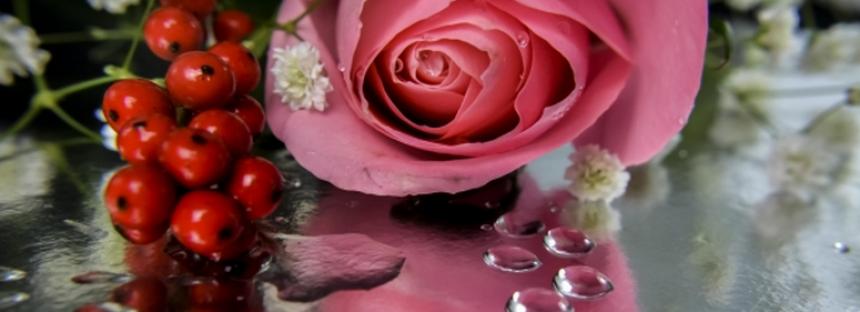 Ai toata viata inainte, desi in urma lasi un trandafir pe taramul ud al vietii