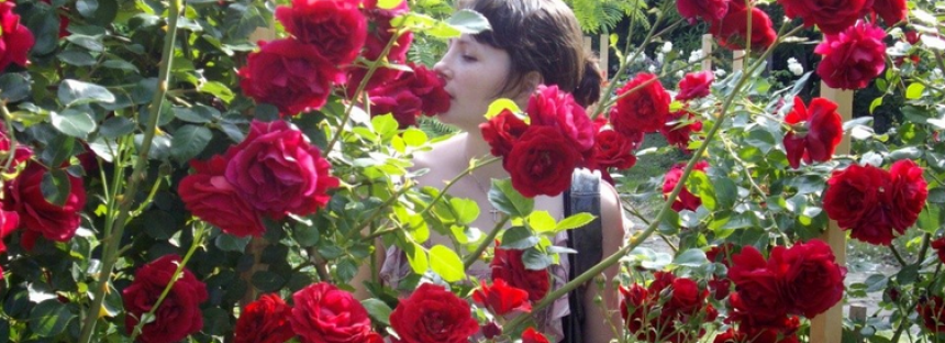 7 grădini cu trandafiri