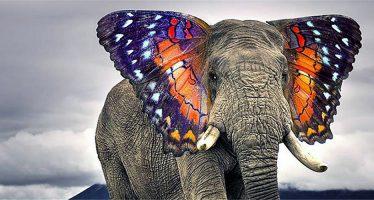 10 lucruri fascinante despre animale