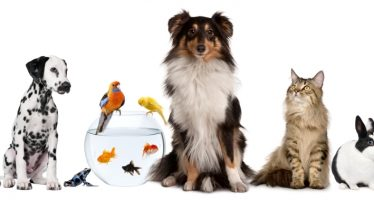 Cum iti transporti animalul de companie in strainatate?