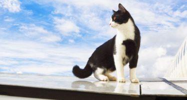 Calatoresti cu pisici in strainatate? Iata ce trebuie sa stii!