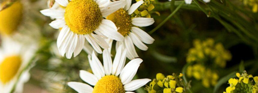 Cadoul ideal de la o florarie online
