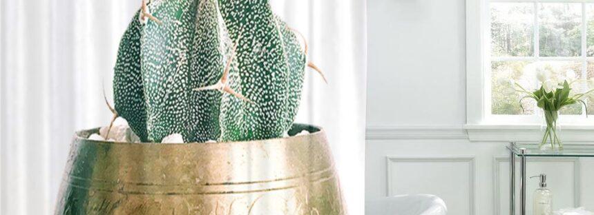 Cateva idei pentru a decora baia cu plante